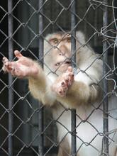 Monkey,cage,zoo,help
