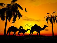 Desert Sunset Egypt