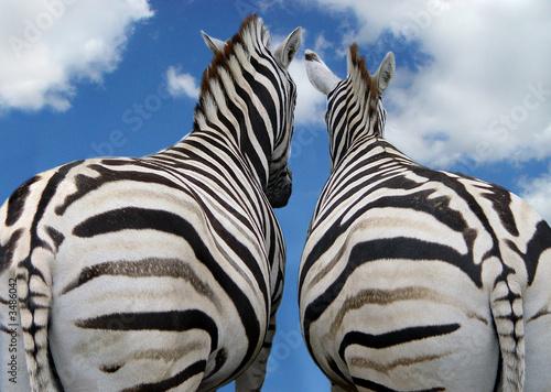 Tuinposter Zebra liebe ist...
