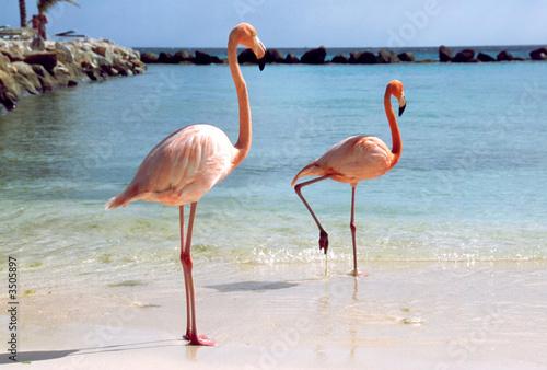 Foto op Plexiglas Flamingo flamingos am strand