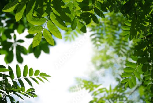 Foto-Duschvorhang - sfondo verde