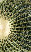 Background Exotic Cactus