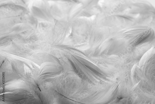 Photo Feathers bw background