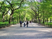 Strolling In Central Park