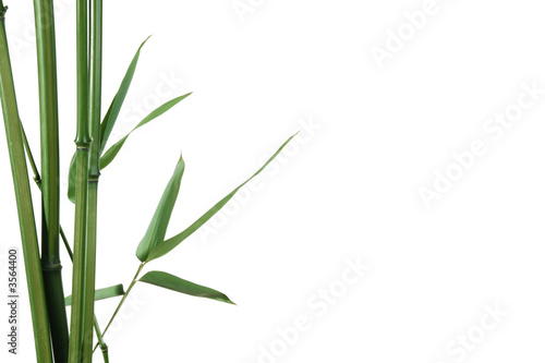 Foto-Duschvorhang - border of bamboo-leaves isolated on white with copy-space