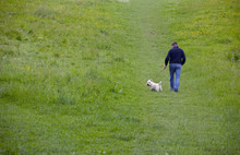 Man Walking A White Scottie Dog In Green Field. Copy Space.