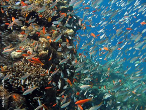 scena-rafy-koralowej