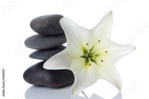 Plissee mit Motiv - madonna lily and spa stone on white (von Anatoly Tiplyashin)