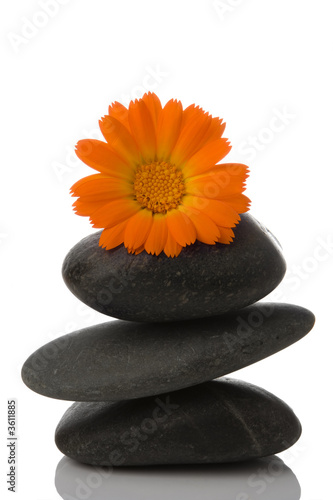 Foto-Stoff - spa stone and orange flower on white background (von Anatoly Tiplyashin)