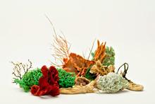 Coral & Seaweed 04