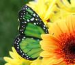 canvas print picture - Pollination