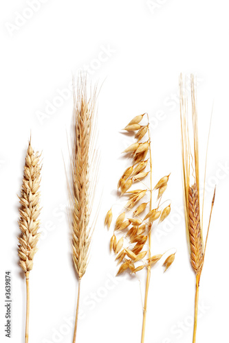 Fotografía  Wheat selection