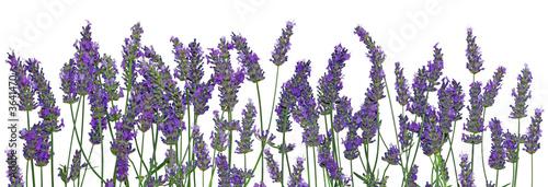 Poster Lavender Lavande