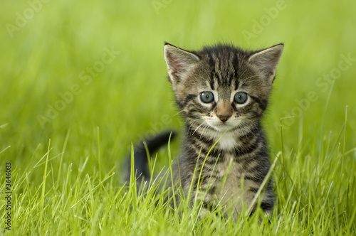 little kitten playing on the grass close up #3646083