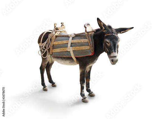 Greek Mule / Donkey