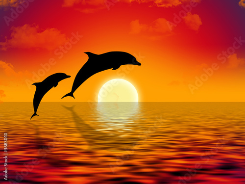 illustration of two dolphins swimming in sunset