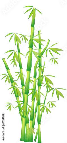 bambus-mlody-krzew