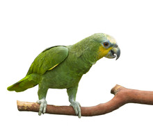 Green Parrot Perched On A Branch
