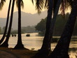 Cocotiers, Laos