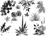 Grunge plant elements