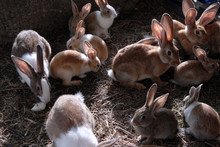 Lots Of Big And Small Rabbits In The Cage