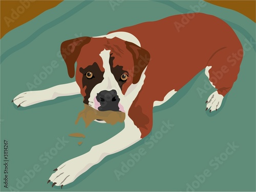 Poster Dogs boxer dog