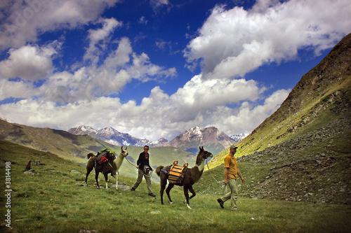 Poster Lama Mit Lamas unterwegs