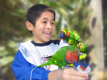 Boy With Parakeets