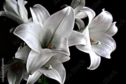 Fotografía Lillies
