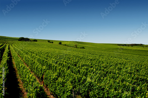 canvas print motiv - tobe_dw : a german vineyard near the rhein river