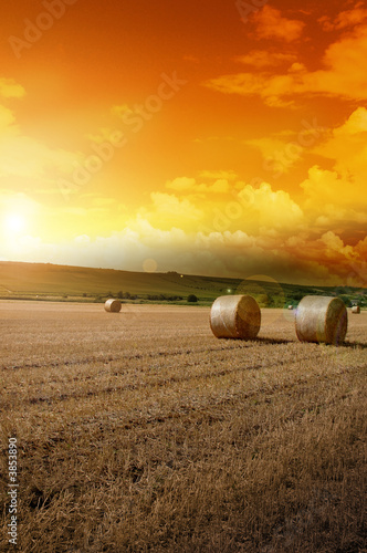 canvas print motiv - tobe_dw : Yellow grain harvested on a farm field