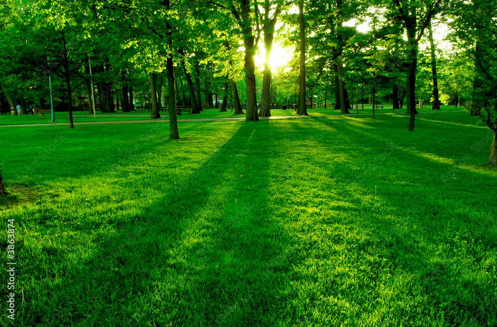 Fototapety, obrazy: Niskie słońce w zielonym parku rzuca długie cienie