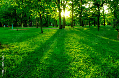 Tuinposter Groene Low setting sun in green park casting long shadows
