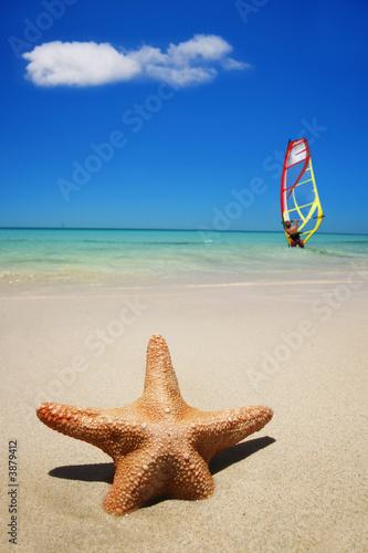 Foto-Leinwand - Estrella de Mar en Una Playa (von Alex Bramwell)