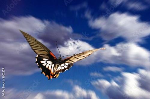 Fotografie, Obraz  papillon dans le ciel