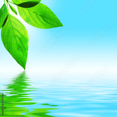Foto-Stoff - fresh leaf, blue sky and shine water surface (von pvl)