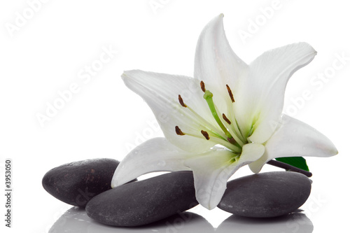 Photo  madonna lily and spa stone