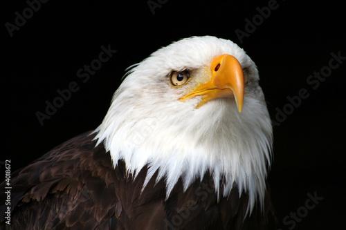 Garden Poster Eagle prédateur 1/3