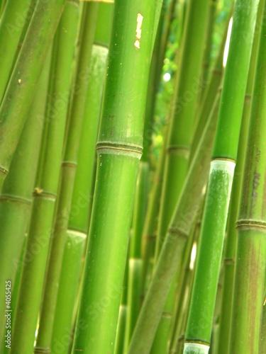 Foto op Canvas Bamboo Green bamboo