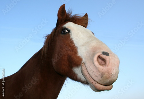 Foto auf AluDibond Pferde Grinsebacke