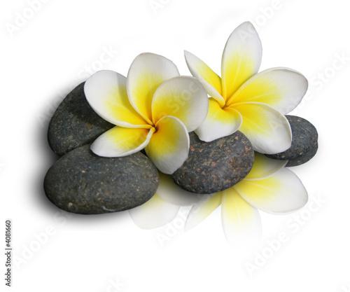 Akustikstoff - Fleur de frangipanier sur pierres