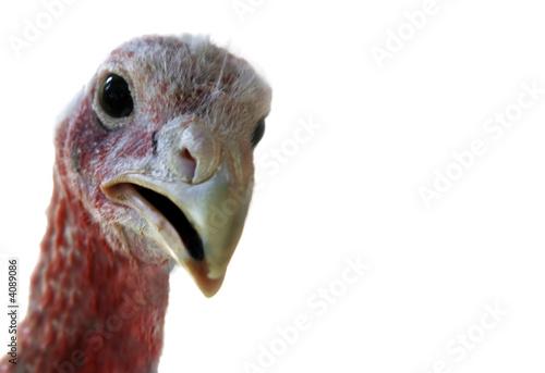 Fotografija  turkey