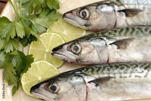 poisson - maquereau