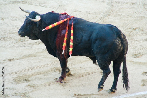 Photo  Bull in Bullfight