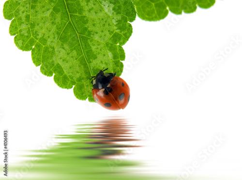 Foto-Kissen premium - Ladybug (von Andrei Nekrassov)