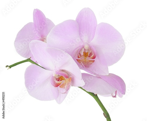 Foto op Canvas Orchidee pink orchid flowers