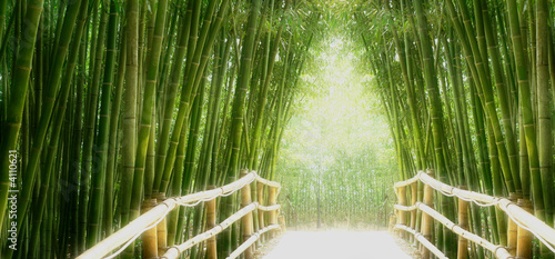 Photo Stands Bamboo Bambus-Allee