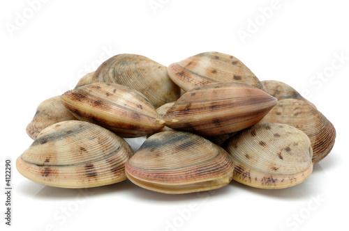 Live clams Tapéta, Fotótapéta
