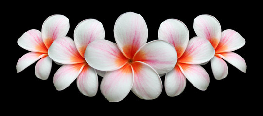 Panel Szklany PodświetlaneBouquet de fleurs de frangipanier
