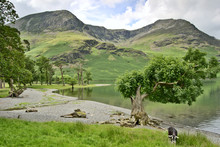 Western Shore Of Buttermere